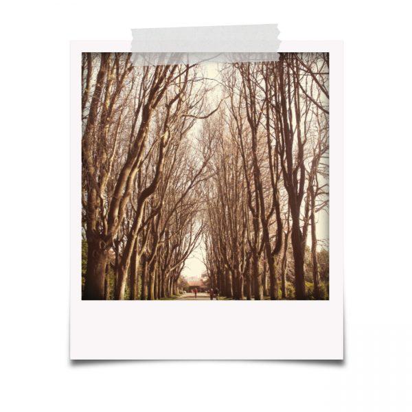Polaroids de Serralves